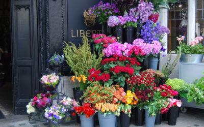 Prima mea florarie si detalii ce nu le-am mai spus nimanui (+povestea firului de verdeata)